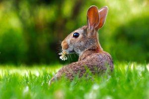 Víte jak slaví velikonoční svátky ve světě?