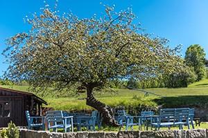 Jabloň z Česka soutěží se stromy ze Španělska nebo z Velké Británie
