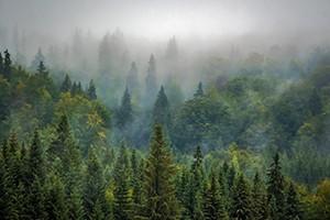 Jaká budoucnost čeká borové lesy v ČR?