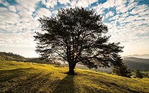 Navrhněte strom do ankety Strom roku 2021