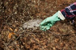 ČSOP: Na Den Země i po celý rok nás příroda potřebuje! Zapojte se