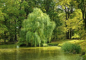 Jihočeský kraj dokončil obnovu Vrbenských rybníků za 109 mil. Kč