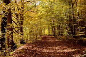 V Krkonoších loni vysázeli 39.000 stromků, většinou listnáče