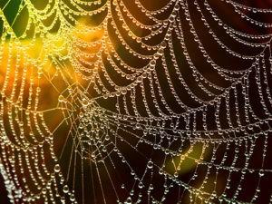 Pavučina nejen pro pavouky – ale i pro střediska ekologické výchovy!
