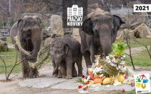 Gratulujeme slonici Lakuny z Pražské ZOO k prvním narozeninám
