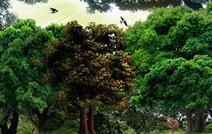 Kolumbie se zaměří na 30 % snížení odlesňování
