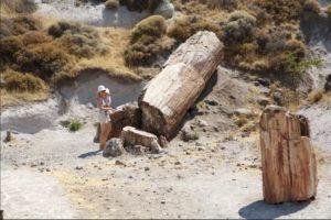 Pravěk vypráví: Fosílie největšího tvora a 20 milionů let starý strom