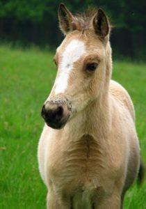 Divocí koně osídlili dvě nové rezervace