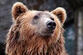 V Plzeňské zoo se po zimním spánku probudili medvědi