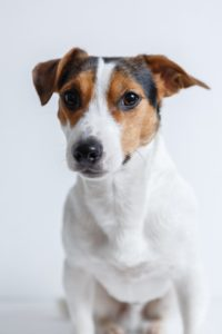 Od února nelze prodávat psa ve zverimexech a na veřejných místech