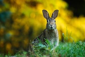 Vysílená zvířata přijímáme, zajíčky nesbírejte, slepé srnky, bohužel, nezachráníme