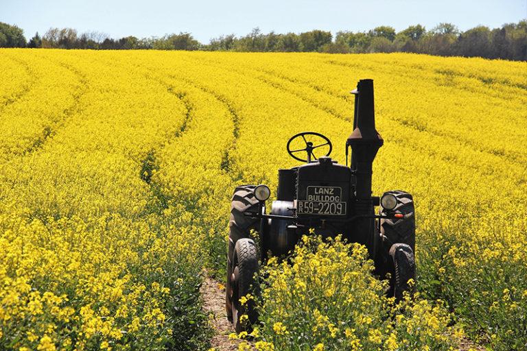 Pesticidy zůstávají ve vodě i potravinách, problémem je nevhodné pěstování řepky nebo kukuřice