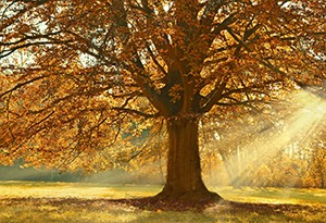 Zájemci už mohou začít navrhovat stromy do ankety Strom roku