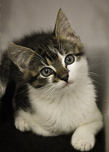 Kroměříž vybuduje na Čápce útulek pro kočky i skladovací halu