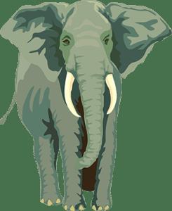 Lidé si mohou na víkend virtuálně půjčit zvíře ze zlínské Zoo