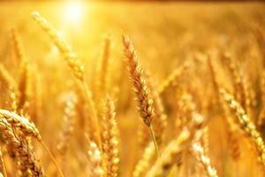 STUDIE: Evropané podceňují vliv zemědělství na znečištění vzduchu