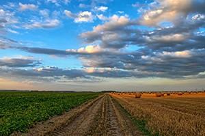 Zpráva o trhu s půdou za rok 2020 zveřejněna. Ceny půdy mírně vzrostly