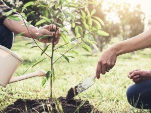 V rámci sázení budoucnosti bylo vysázeno milion stromů a výsadba pokračuje