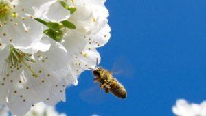 Výzvy pro veřejnost na květen: opylovači a opylovatelé