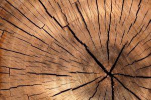 Vědci: letokruhy pomáhají zjistit, jaké vichřice narušily lesy