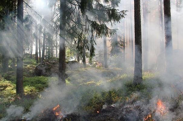 Hasiči v Pardubickém kraji evidují během června již 19 požárů
