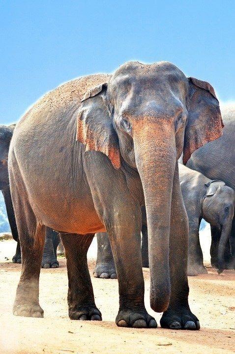Plzeňská zoo už zadala projekt nového pavilonu pro slony indické za miliardu