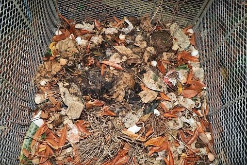 V Pardubicích roste počet domácností z rodinných domů, které třídí bioodpad