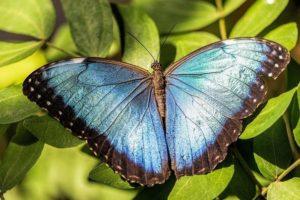 Výstava v botanické zahradě v Troji představí jedovaté druhy motýlů