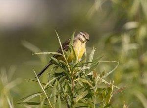 Ornitologové vytváří u Dubňan ptačí park, napočítali v něm 162 ptačích druhů