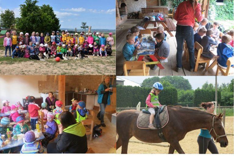 Tisková zpráva o projektu: Ze života koní