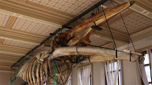 Národní muzeum otevírá expozici Zázraky evoluce a znovu ukazuje plejtváka
