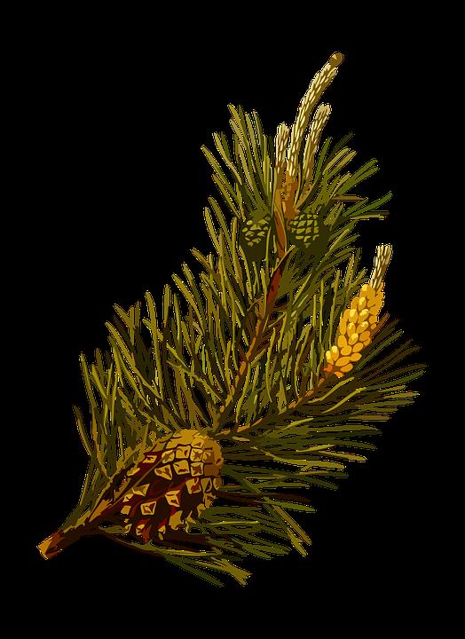 Památná borovice u Jemnice má připomínat nesmyslnost válek