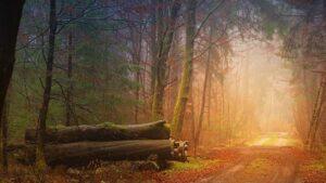 Mrtvé dřevo ročně uvolní uhlík ve výši globálních emisí z fosilních paliv