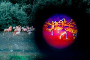 Zvířata v pražské zoo mohou lidé po setmění sledovat termokamerou