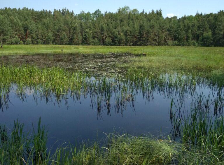 Na jihu Čech jsou dvě nové přírodní památky, rybník a tůně