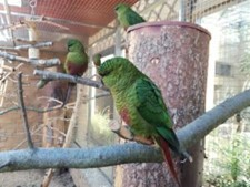V Bošovicích pořídili nový druh papoušků, jiný zapůjčili do Prahy