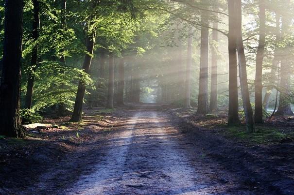 Univerzitní lesy v okolí Brna se letos zotavují z vln sucha a kůrovcové kalamity