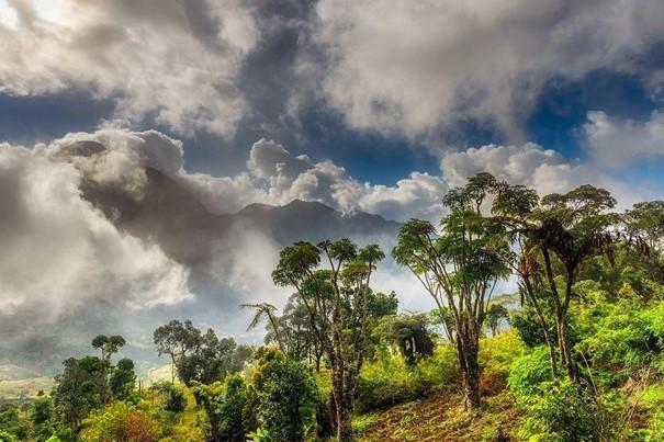 Vědci: Africké horské lesy zadržují více uhlíku, než se předpokládalo