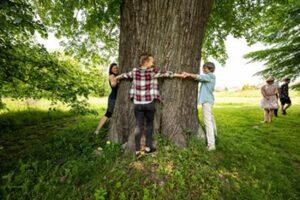 V anketě o Strom roku zatím vede lípa ze Svitavska, hlasování vrcholí
