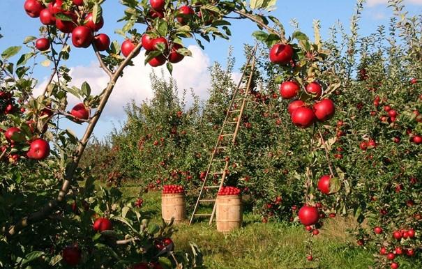 Grant na novou zeleň získalo 55 projektů, například veřejný ovocný sad