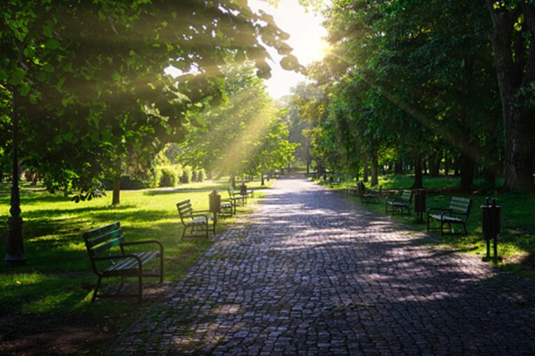 U Blanska obnoví 200 let starou alej, stromy ponesou jména osobností města