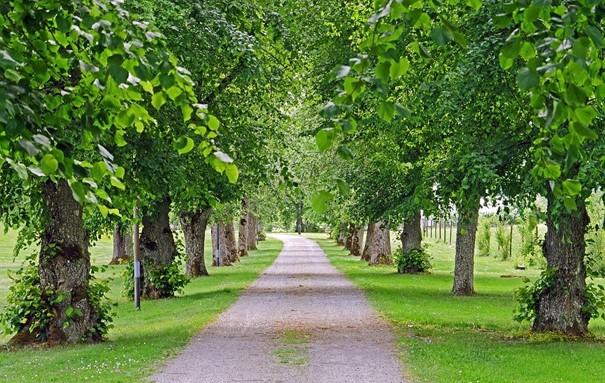 Kroměříž obnoví ve třech lokalitách stárnoucí zeleň, vysadí desítky stromů